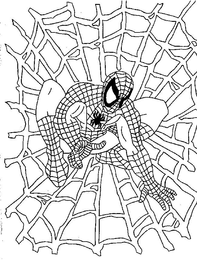homem aranha na teia
