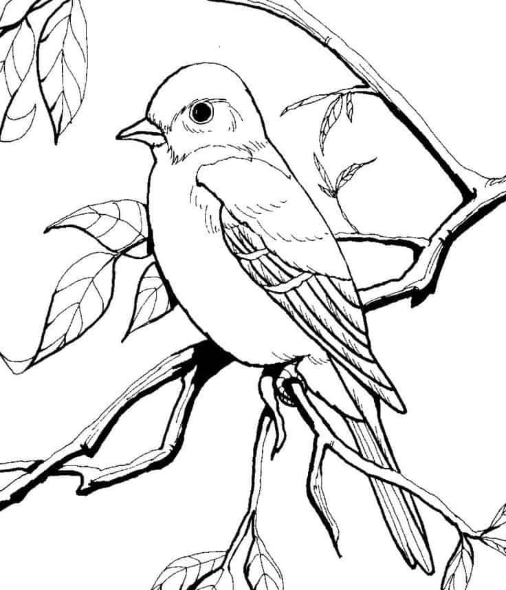 pássaro para imprimir e pintar