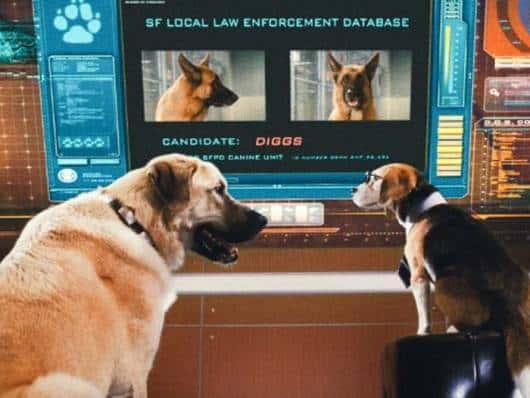 Filme como cães e gatos.