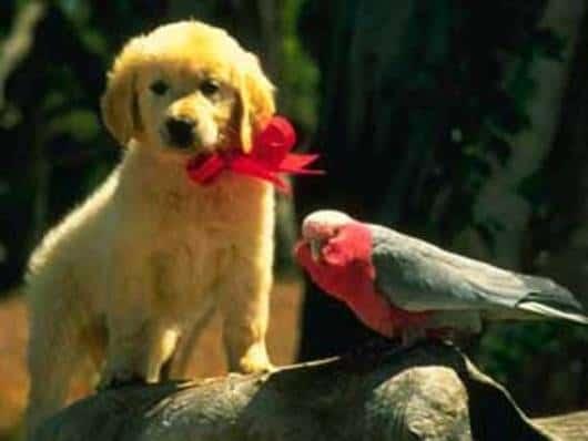 Cena do filme: Napoleon, um cãozinho valente.