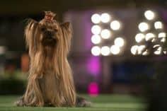 Cena do filme Show Dogs.