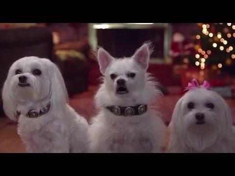 Cena do filme os três cães mosqueteiros.