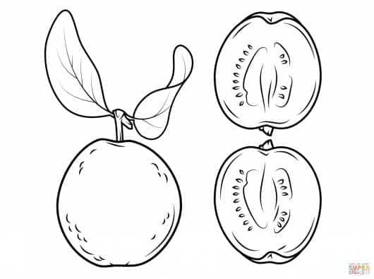 desenhos de frutas para colorir goiaba com sementes