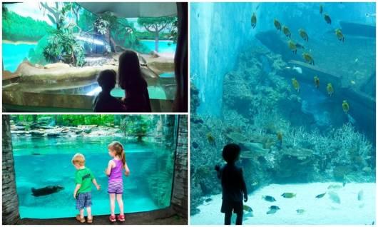 passeio no aquário