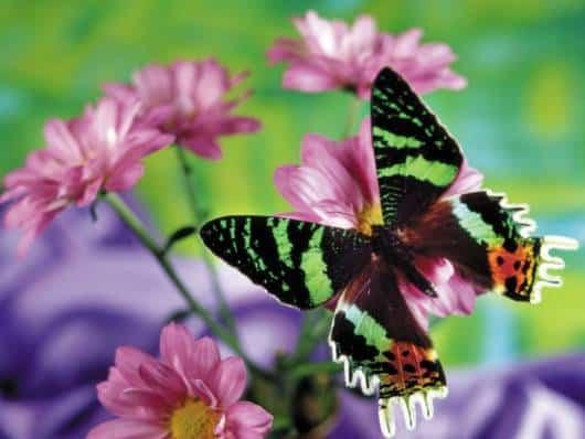 Expresse sua arte colorindo borboletas