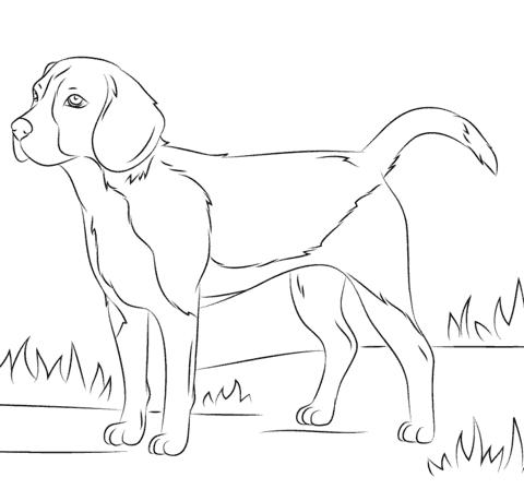 Cachorro de porte grande para colorir