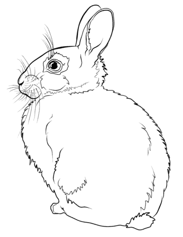 ideias de coelho simples para pintar