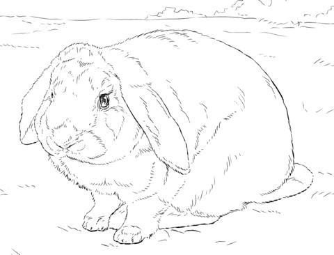 pequeno coelho simples