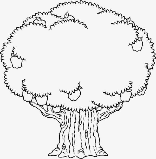 Desenho árvores para colorir 2