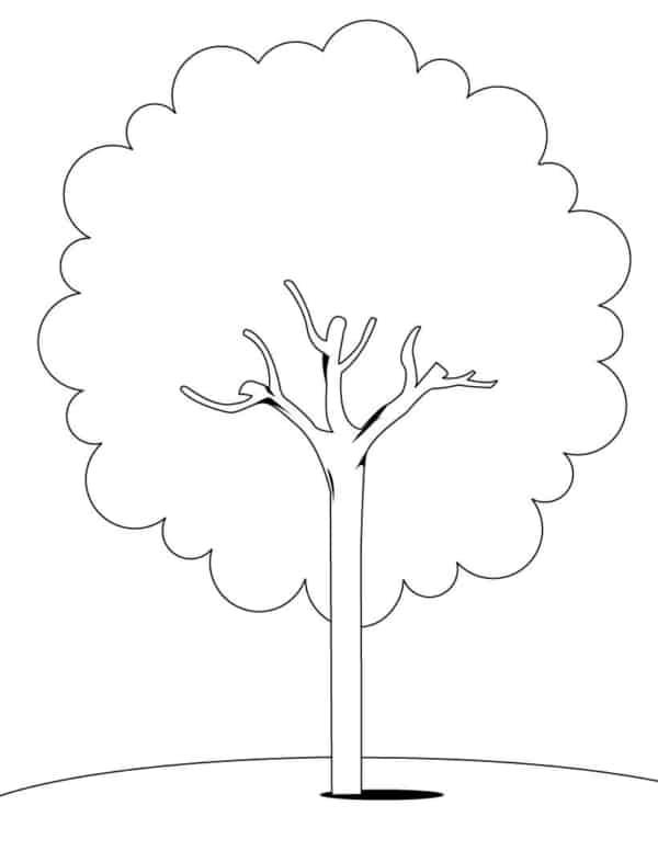 Desenho árvores para colorir 3