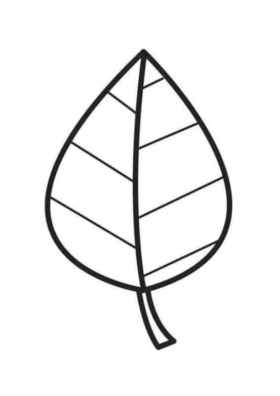 Folhas de árvores para colorir 1