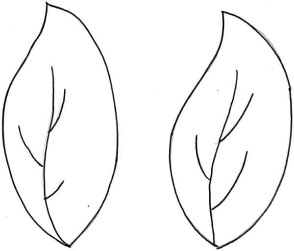 Folhas de árvores para colorir 2