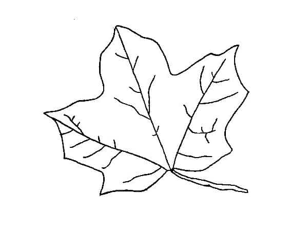 Folhas de árvores para colorir 7