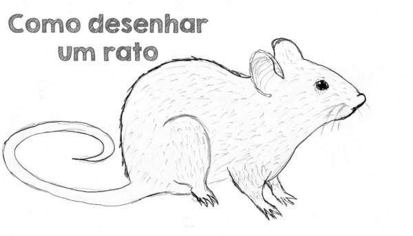 dicas de como desenhar um rato