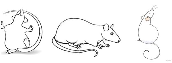 ideias simples para desenho de rato