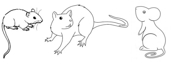 desenhos simples de rato
