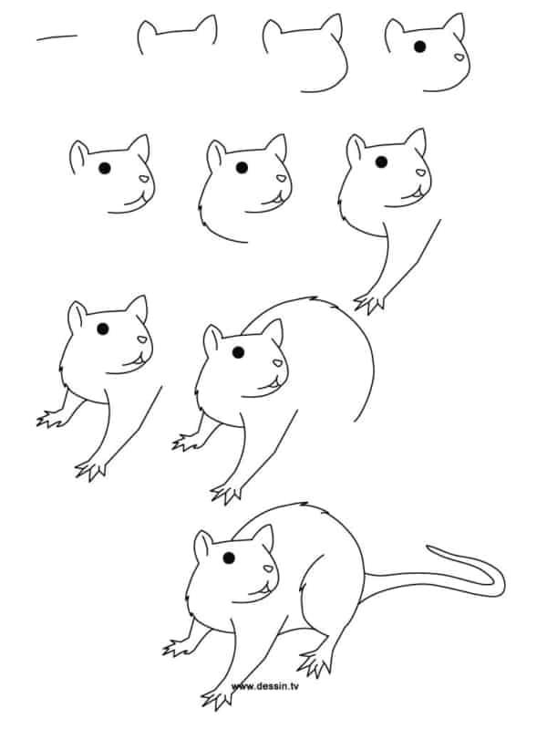 passo a passo para desenhar um rato