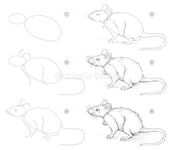 passo a passo completo para desenhar um rato