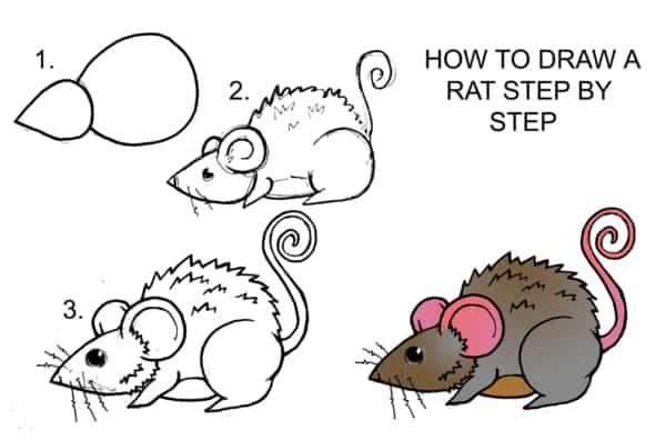 como desenhar um rato simples