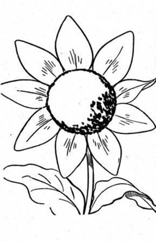 Desenho facil de girassol