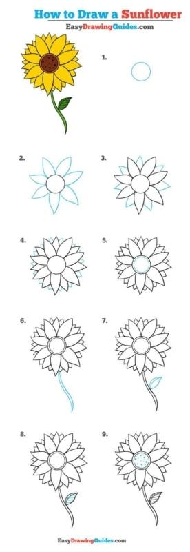 Dez etapas de como desenhar um girassol