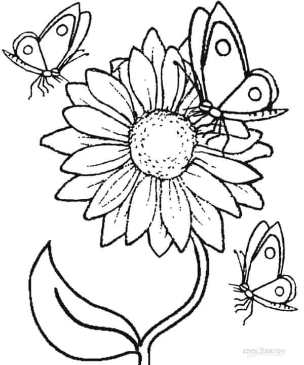 Girassol com borboletas