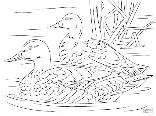 desenho de pato no rio para pintar