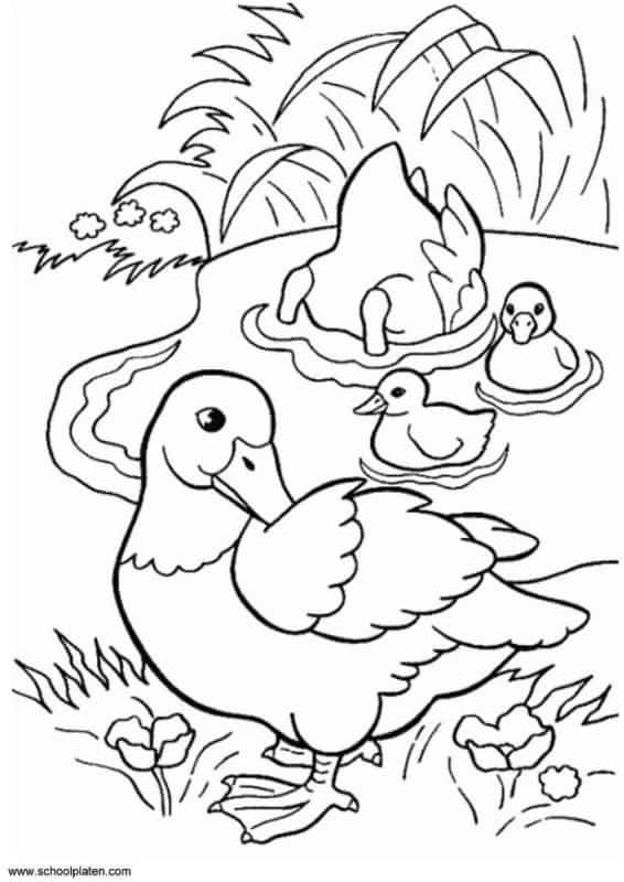 desenho de familia pato em lagoa para colorir