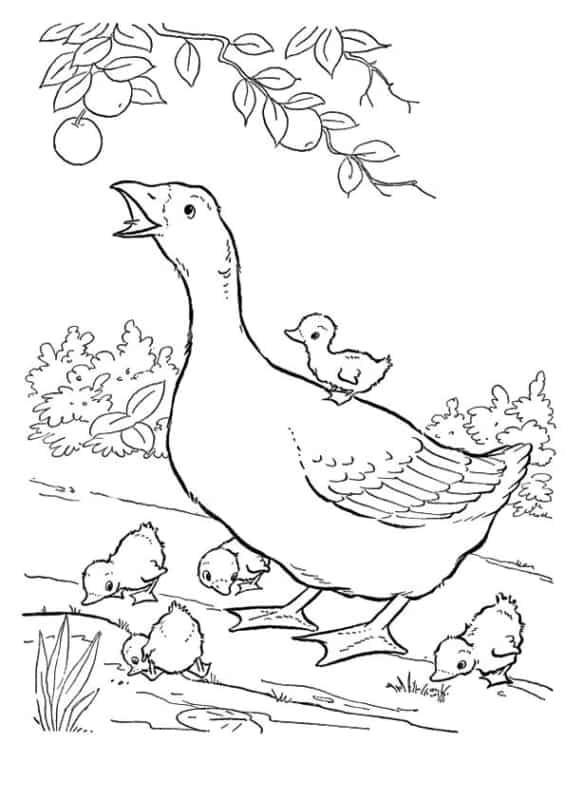 desenho de familia pato para imprimir e pintar