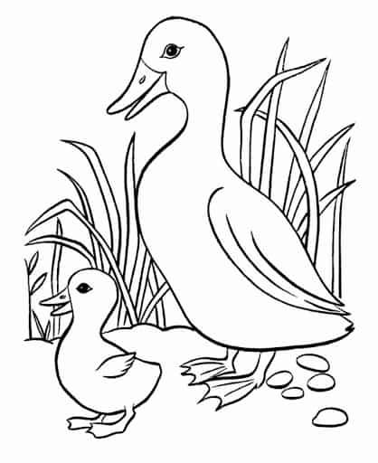 desenho de pato com filhote para imprimir