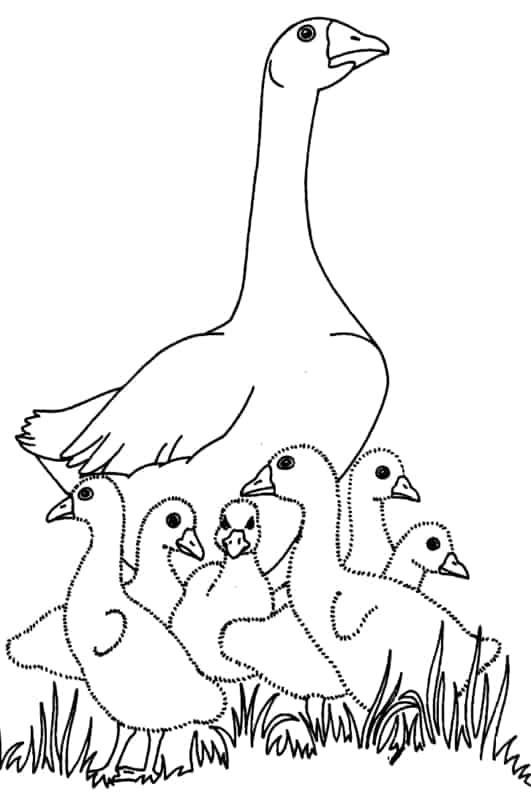 desenho de mae pato com filhotes para pintar