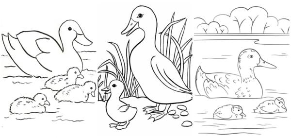 desenhos de pato com filhotes para colorir