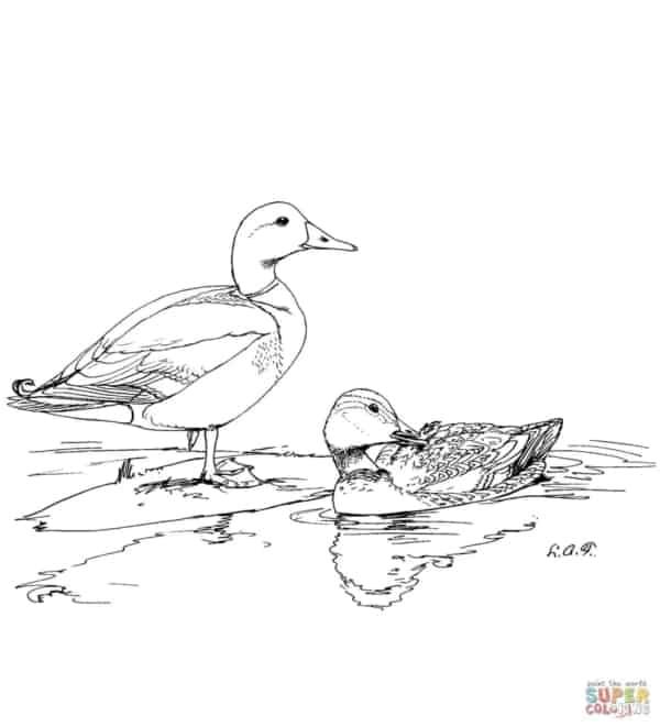 desenho de patos na lagoa para imprimir