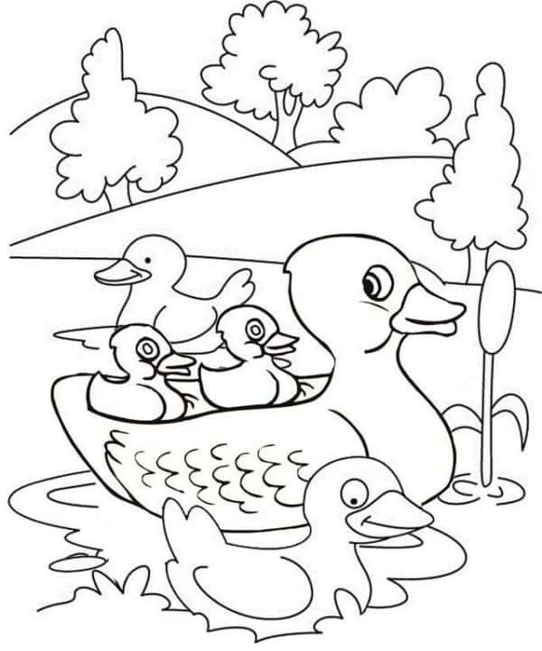 desenho de pato na lagoa para imprimir gratis