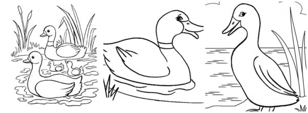 desenhos de patos na lagoa para colorir