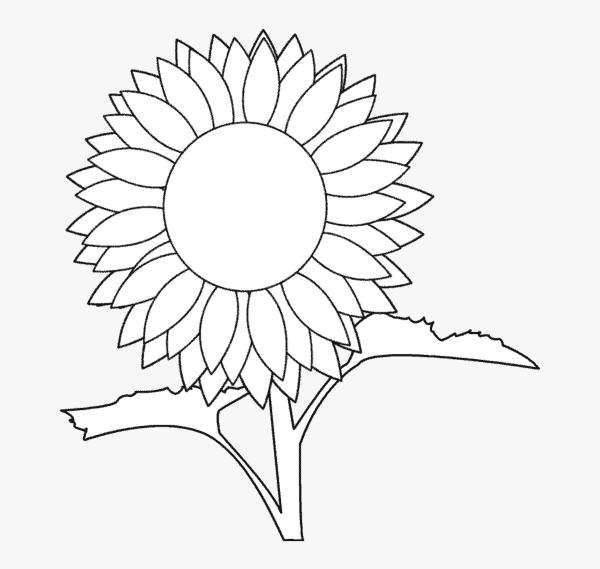desenho simples de girassol para pintar