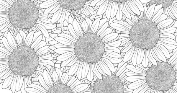 desenho grande de girassol para imprimir e colorir