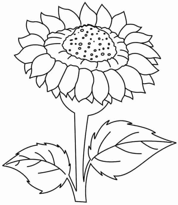 flor de girassol grande para pintar