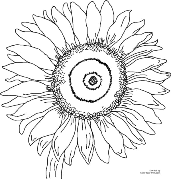 flor grande de girassol para pintar