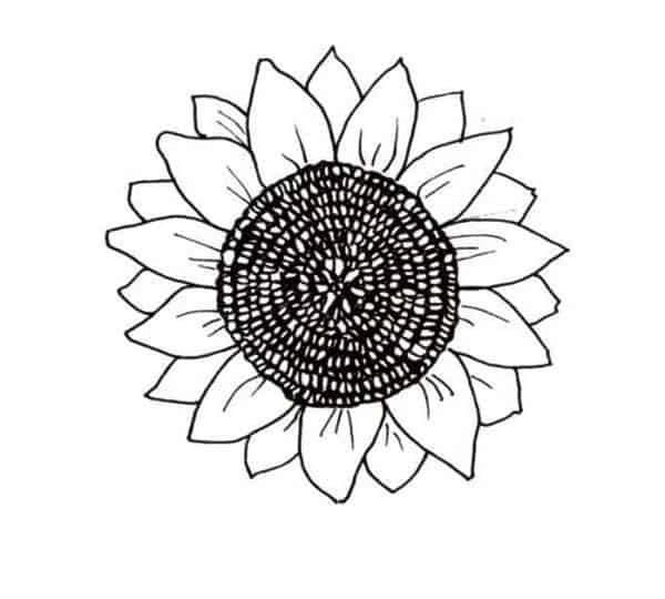 desenho de flor de girassol para imprimir