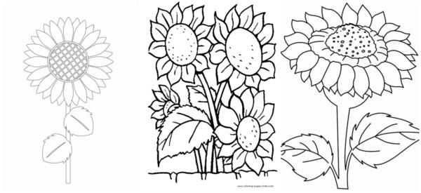 flores grandes de girassol grande para pintar
