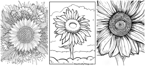 desenhos de girassol para imprimir gratis