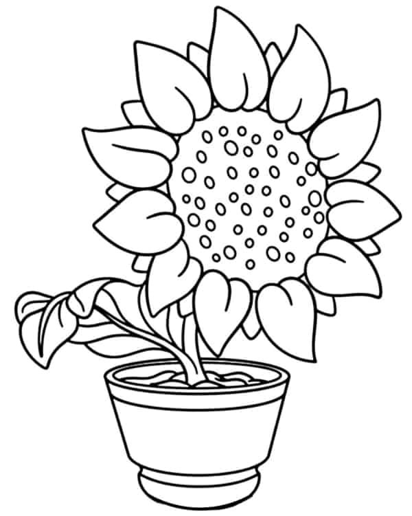 flor de girassol em vaso para pintar