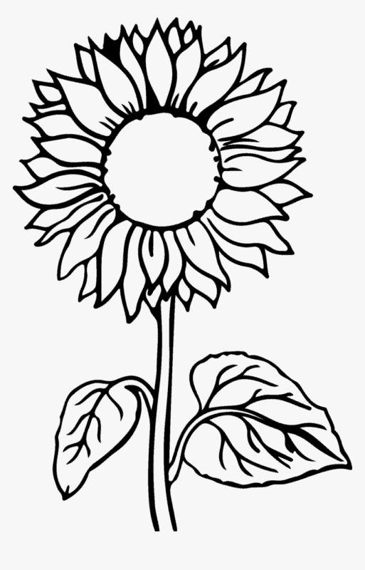 desenho de girassol para criancas