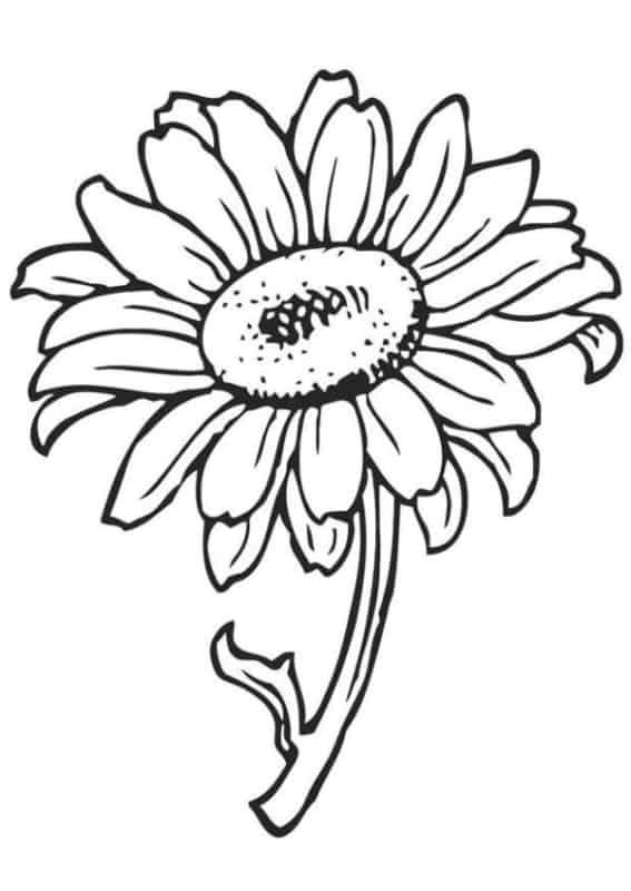 flor de girassol com caule para pintar