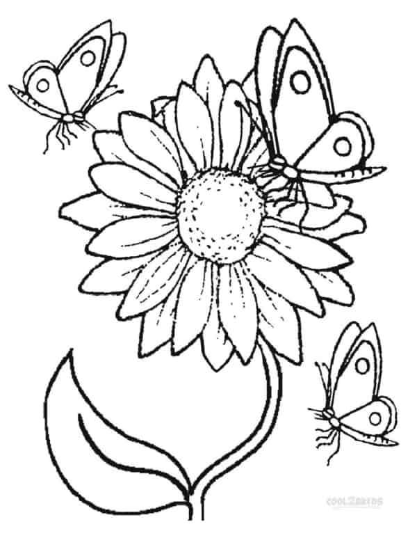 flor de girassol com borboletas para pintar